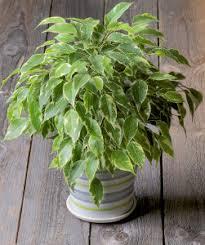 sind pflanzen im schlafzimmer schädlich zuhause bei sam