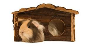 Pine Bedding For Guinea Pigs by How To Prevent My Guinea Pigs From Throwing Bedding Everywhere