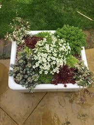 Gerbera Corner Pedestal Sink by Tips For Planting In Vintage Sinks Container Gardening