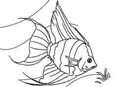 Coral Reef Fish Angel Coloring Pages