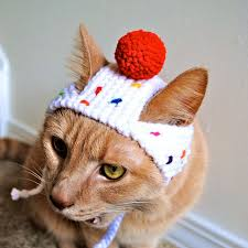 costume for cat the 25 best costumes for cats ideas on cats