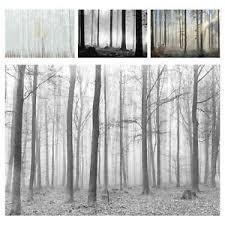 vlies fototapete wald nebel schlafzimmer schwarz weiß birken