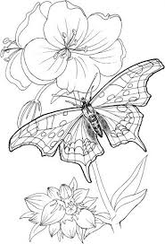 Butterfly Coloring Pages Select From 27318 Printable Of Cartoons Animals Nature Bible And Many More
