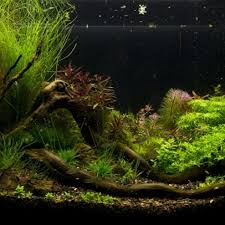 Aquascape Design Top 10 Aquascape Design Youtube Gorgeous ... Aquascape Designs For Your Aquarium Room Fniture Ideas Aquascaping Articles Tutorials Videos The Green Machine Blog Of The Month August 2009 Wakrubau Aquascaping World Planted Tank Contest Design Awards Awesome A Moss Experiment Driftwood Sale Mzanita Pieces Two Gardens By Laszlo Kiss Mini Youtube Warsciowestronytop