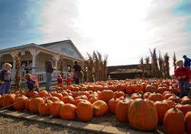 Kingsway Pumpkin Farm Hours by Danielle Author At Northeast Ohio Family Fun Page 39 Of 59