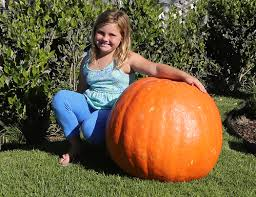 Heather Hill Pumpkin Patch by Campbell Realtors 2014 Pumpkin Patch Recap Huntington Beach Real