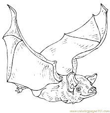 Bat Coloring Page 12