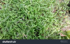 Weeds Backyard Stock Photo 489990523 - Shutterstock Common Garden Weeds This Common Garden Weed Is An Effective Pain Backyard Habitat The Power Of One Writer Page 3 13 Edible And Flowers Hgtv How To Identify Lawn Howtos Diy Foragers Handbook Grow Gather Barter Hunt 101 A Nutritious Free Treat For Your Chickens Worlds Best Photos Ragweed Weeds Flickr Hive Mind Wild Plantain A But Useful Weed T Looks Very My Florida Brighten The Corner Where You Are Plants Darxxidecom Five Healthiest Edibles Throw Canada Day Party Ppare Brittany
