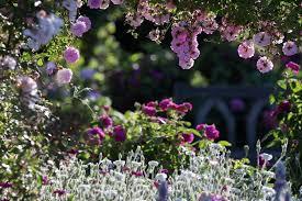 Sweet Magnolia Garden Centre Lissarda Co Cork Garden Center