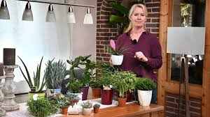 zimmerpflanzen günstig kaufen