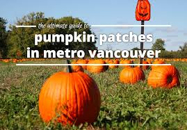 Pumpkin Picking Richmond by Ultimate Guide To Pumpkin Patches In Metro Vancouver Yoyomama