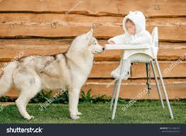 Beautiful Husky Standing Near Little Child Stock Photo (Edit ... Safety First Timba Highchair White High Chairs Strolleria Ikea Chair With Standing Laptop Station Fniture Little Girl Standing Image Photo Free Trial Bigstock Handsome Artist Eyeglasses Gallery Amazoncom Floorstanding High Bracket Bar Lift Modern Girl Naked On A Chair Stand In The Bathroom Tower Or Learning Made Splendid Office Desks Amusing Solar Cantilever Leander Free Worth Vitra Rookie