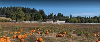 Portland Tn Pumpkin Patch by Top Pumpkin Patches To Visit Across The United States Landcentral