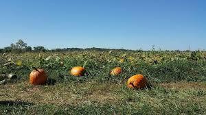 Frederick Maryland Pumpkin Patch by 5 Amazing Maryland Pumpkin Patches Near Washington Dc Walking On