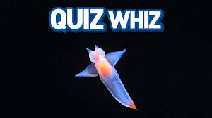 Halloween Trivia Questions And Answers Pdf by Quiz Whizzes