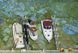 Bathtub Beach Stuart Fl Tides by Florida Has Confirmed 44 Algae Bloom Sites Some With Toxic Levels