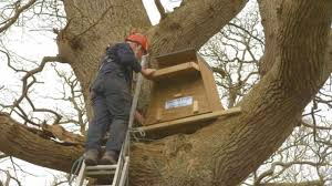 How To Erect A Barn Owl Nestbox In A Tree - YouTube Barn Owl Boxes And Breeding Success Nture Lakeland How To Erect A Owl Nestbox In Tree Youtube Bisham Group For Bbowt Rerves Wildlife Home Plans Audubon Field Guide House Modern Cepermans Blog Building Box Bird L Duhallow Raptor Cservation Project Ring Shows Value Boxes Attention Barn Owls Custom Bungalows Available Now Sheltons Piedmont Iniative New Hope Society Sustainability Action Alexandra District Energy Utility Adeu