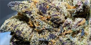 10 Best Weed Strains To Party With