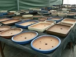 pot bonsai grande taille poteries de grande taille pépinière bonsai de jacques galinou
