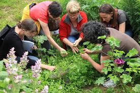 cuisine sauvage reconnaître et cuisiner les plantes sauvages comestibles avec