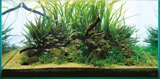 ADA Aqua Soil Malaya And Africana - Aquascaping Wiki Photo Planted Axolotl Aquascape Tank Caudataorg Suitable Plants Aqua Rebell Tutorial Natures Chaos By James Findley The Making Aquascaping Aquarium Ideas From Aquatics Live 2012 Part 4 Youtube October 2010 Of The Month Ikebana Aquascaping World Public Search Preserveio Need Some Advice On My Planned Aquascape Forum 100 Cave Aquariums And Photography Setup Seriesroot A Tree Animalia Kingdom Show My Our Lovely 28l Continuity Video Gallery Green 90p Iwagumi Rock Garden Page 8