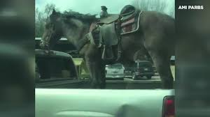 100 Truck Driver Jobs In Houston Tx Man Who Drove With Horse In Truck Bed May Face Animal Cruelty