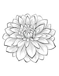 Flowers Vegetation Coloring Pages Adults Adult Dahlia Flower Rose For Butterflies And Design Full Size