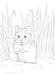 Click To See Printable Version Of Hamster Coloring Page Categories Hamsters