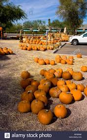 Pumpkin Patch Petaluma Lakeville by 100 Halloween Pumpkin Patch Phoenix 36 Best Pumpkin Patches