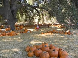 Pumpkin Patch Near Corona Ca by Pumpkin Patch