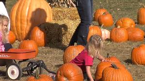 Pumpkin Patch College Station 2014 by Buffalo River Pumpkin Patch In Glyndon Experiencing Successful