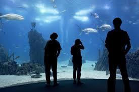 aquarium geant a visiter belgique oeiras aquarium vasco da gama le guide vert michelin