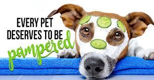 Rat Terrier Excessive Shedding by Wolf Merrick Animal Hospital Kenosha Vet Animal Clinic Blog