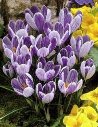 24 best garden bulb ideas images on garden cgi and
