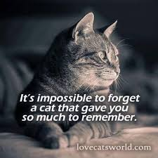 cat quotes the 25 best cat quotes ideas on self belief