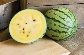 Fertilizer For Pumpkins And Watermelons by Sunshine F1 Watermelon Seed Johnny U0027s Selected Seeds