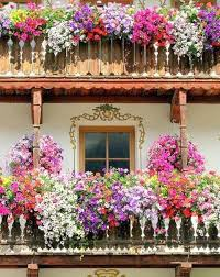 Window Boxes Posted Via Gsfrenchshabbylifetumblr