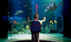 aquarium geant a visiter belgique sea blankenberge blankenberge parc animalier ferme