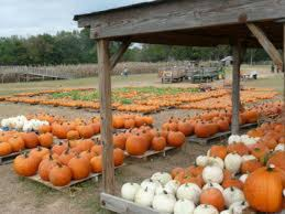 Grims Greenhouse Pumpkin Patch by 21 Best Fall Family Fun Images On Pinterest Fall Family