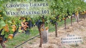 Growing Grapes And Wine Making 101 | Agriculture In Cattaraugus ... Small Plot Intensive Gardening Tomahawk Permaculture Backyard Vineyard Winery Grapes In Your Own Backyard Lifestyle Bucks County Courier More About The Regent Winegrape Growing Your Grimms Gardens Trellis With In The Yard At Home How To Grow Grapes Steemit Seedless Stark Bros Grape Orchards Pinterest Orchards Seattle Wa Youtube Grown Grape Vine And Trellis Stock Photo Royalty First Years Goal