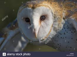 Barn Owl, (Tyto Alba). Injured Education Animal With Wildlife ... Barn Rabbit Rescue Driving The Rusty 200 Abdoned 56 Chevy Cheap Truck Challenge Central Whidbey Island Fire Responds To At The Smith Injured Barn Owl Rescued Wildlife Friends Foundation Thailand Old Barns Long May They Live Shelter And Stand In Green Open Unboxing Paw Patrol Roll Rockys And Play Fun The Rescue Barn Adopted Dogs Rvr Horse Takes Worst Cases To Heal Renew Tbocom Paw Patrol Rocky8217s Track Set Walmartcom European Owl A Bird Rehabilitated Trained For Assortment Of 6 Small Dogs From Rescue Group Sit On Lavendar