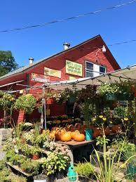 Daves Pumpkin Patch by Pumpkin Picking Guide Cortland County Convention U0026 Visitors Bureau