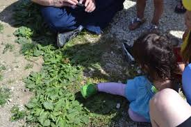 Pumpkin Patch In Homer Glen Illinois by A Trip To The Butterfly Festival At Garden Patch Farms Mommy Sanest