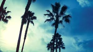 17 Best Images About Palm Trees On Pinterest