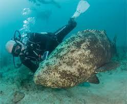 dive hutchinson island fl snorkeling hutchinson island dive