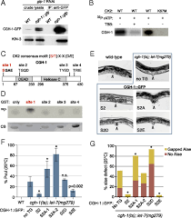 adresse si e social ratp casein kinase ii promotes target silencing by mirisc through direct