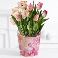 send potted garden plants and flowers proflowers