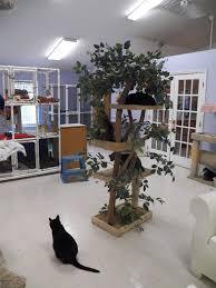 Surviving Pet Care Program