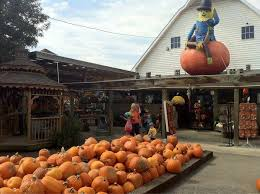 Pumpkin Patch College Station 2017 by 11 Best Family Friendly Pumpkin Patches In Cincinnati