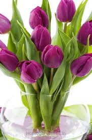 amazing facts about tulips that will impress your friends tulip